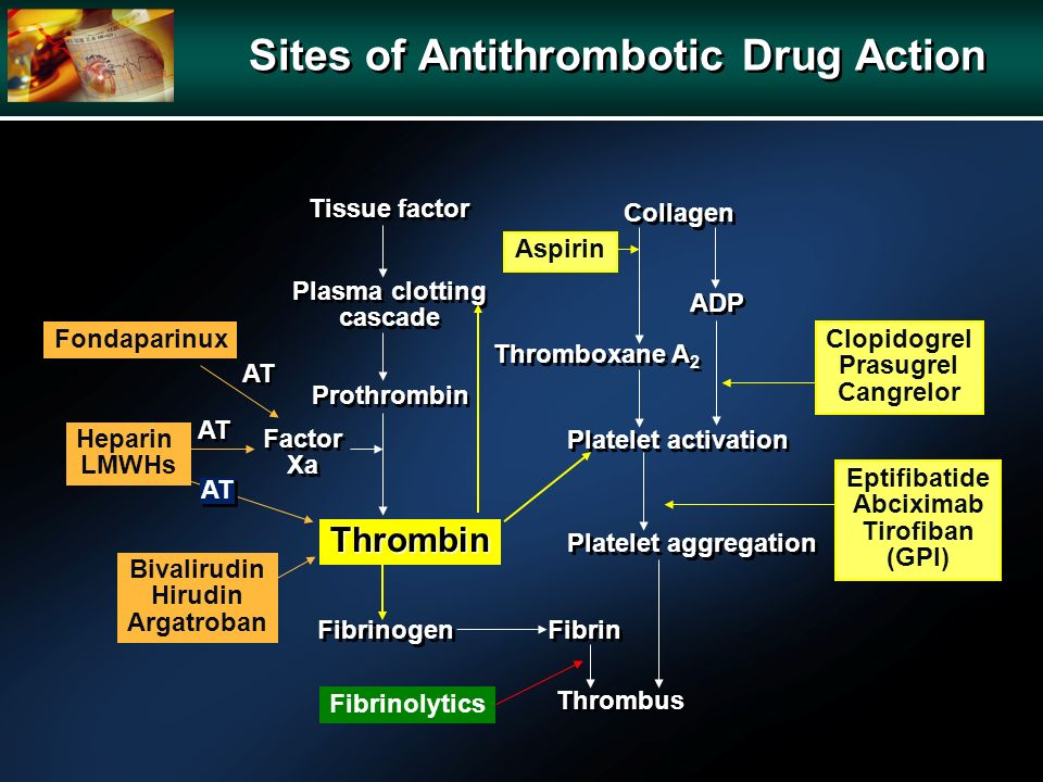 Sites of Antithrombotic Drug Action Tissue factor Plasma clotting cascade Plasma clotting cascade Prothrombin Thrombin Fibrinogen Fibrin Thrombus Platelet aggregation Platelet activation Collagen Thromboxane A 2 ADP AT Aspirin Clopidogrel Prasugrel Cangrelor Eptifibatide Abciximab Tirofiban (GPI) Bivalirudin Hirudin Argatroban Factor Xa Factor Xa Heparin LMWHs Fibrinolytics Fondaparinux AT