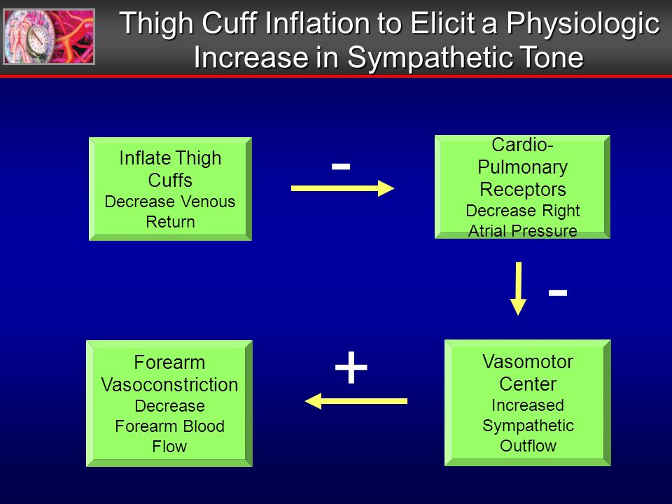 Thigh Cuff Inflation to Elicit a Physiologic Increase in Sympathetic Tone Inflate Thigh Cuffs Decrease Venous Return Cardio- Pulmonary Receptors Decrease Right Atrial Pressure Forearm Vasoconstriction Decrease Forearm Blood Flow Vasomotor Center Increased Sympathetic Outflow - - +