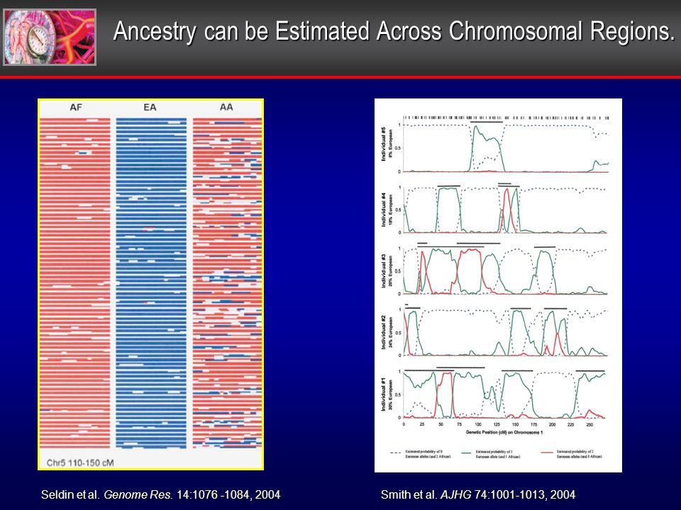 Ancestry can be Estimated Across Chromosomal Regions.