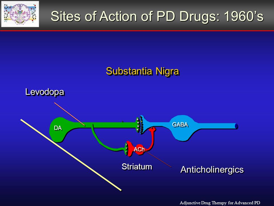 DA GABA ACh Striatum Substantia Nigra LevodopaLevodopa Anticholinergics Sites of Action of PD Drugs: 1960s Adjunctive Drug Therapy for Advanced PD