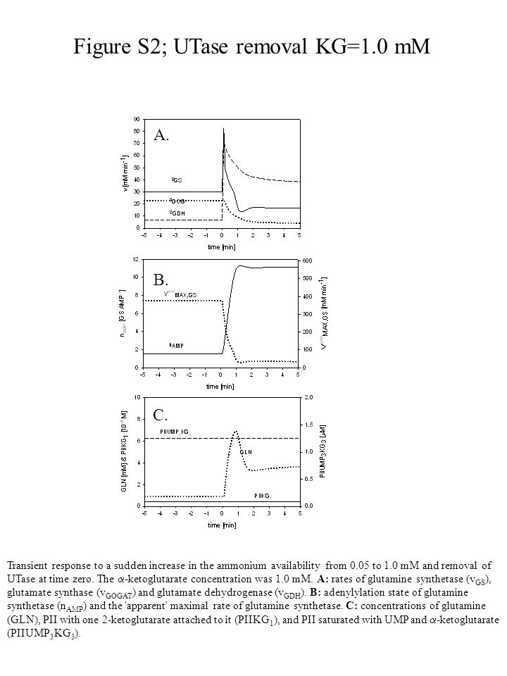 Figure S2; UTase removal KG=1.0 mM Transient response to a sudden increase in the ammonium availability from 0.05 to 1.0 mM and removal of UTase at time zero.