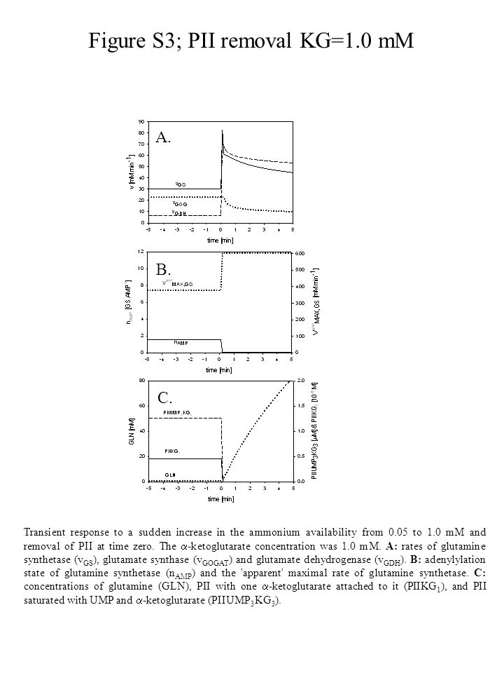 Figure S3; PII removal KG=1.0 mM Transient response to a sudden increase in the ammonium availability from 0.05 to 1.0 mM and removal of PII at time zero.