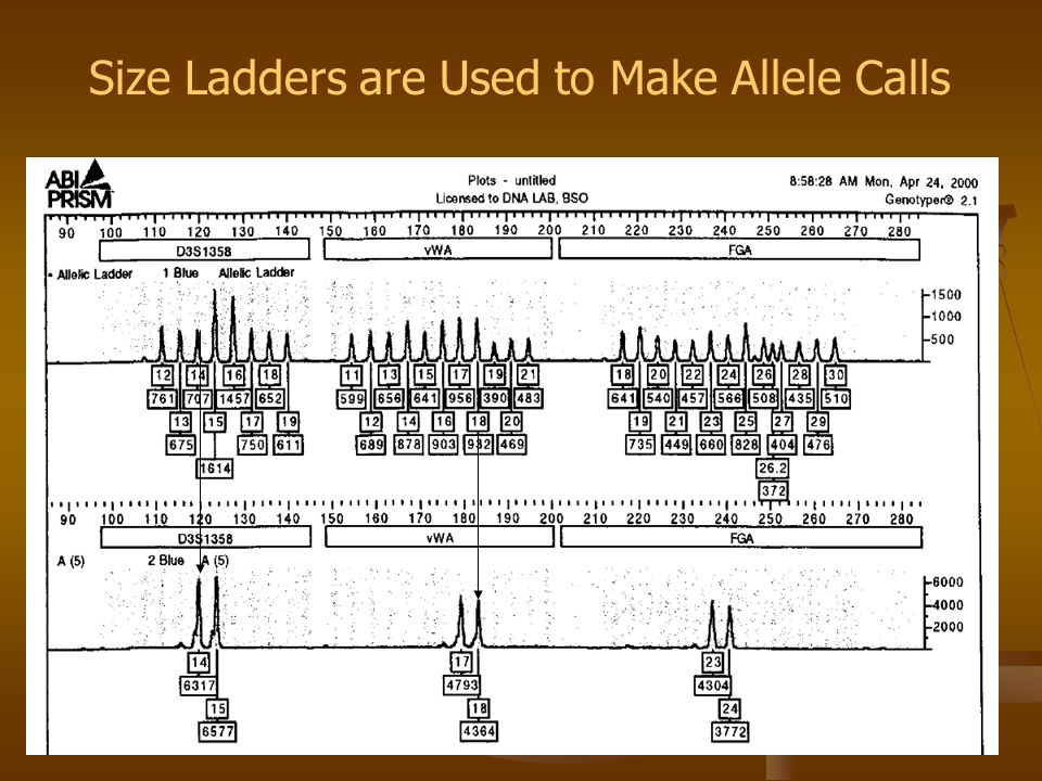 Size Ladders are Used to Make Allele Calls
