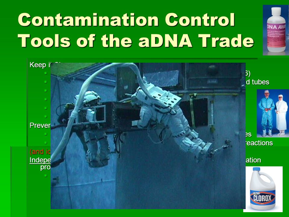 21 Contamination Control Tools of the aDNA Trade Keep it Clean Surface decontamination of bone helps (Bouwman et al 2006) Surface decontamination of bone helps (Bouwman et al 2006) DNase I (Eshleman and Smith 2001) cleanup of reagents and tubes DNase I (Eshleman and Smith 2001) cleanup of reagents and tubes Positive Pressure HEPA-filtered air in the lab Positive Pressure HEPA-filtered air in the lab Regular UV-irradiation of surfaces Regular UV-irradiation of surfaces Controlled and limited access to the lab Controlled and limited access to the lab Dedicated and disposable laboratory clothing and shoes Dedicated and disposable laboratory clothing and shoes Prevent Carryover Uni-directional travel between extraction and PCR laboratories Uni-directional travel between extraction and PCR laboratories Use of dUTP (Uracil) and pre-digestion of subsequent PCR reactions Use of dUTP (Uracil) and pre-digestion of subsequent PCR reactions (and ideally) Independent confirmation (in temporally separate extraction/amplification procedures and possibly at another laboratory) Split the samples first.