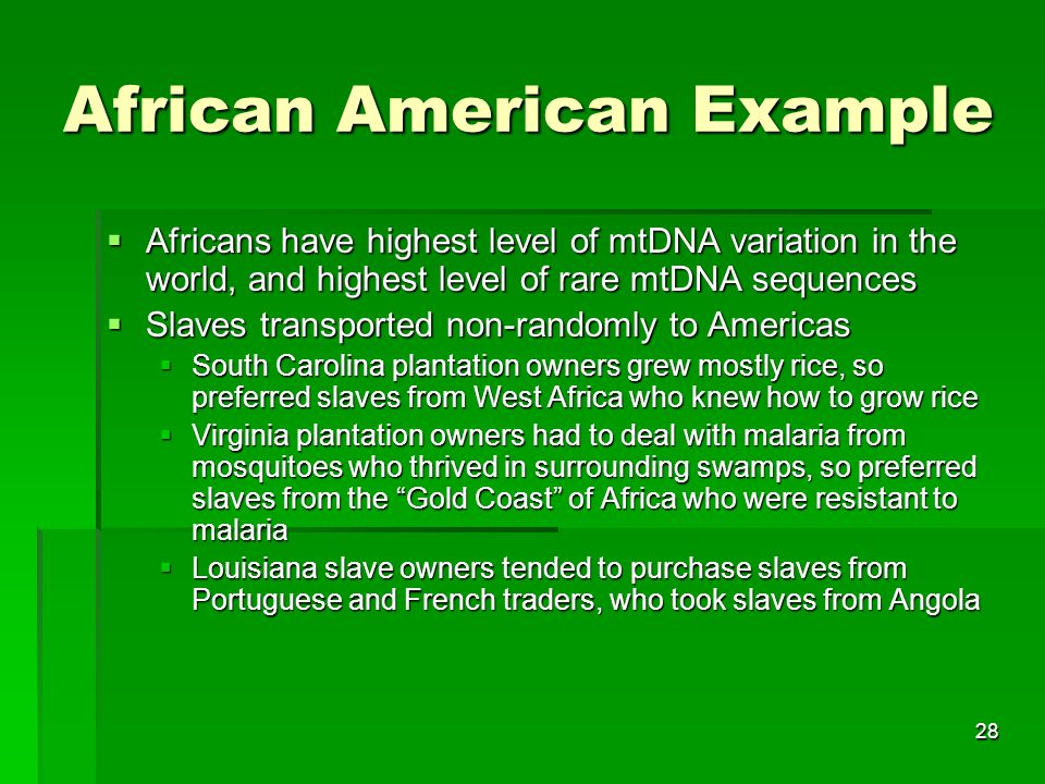28 African American Example Africans have highest level of mtDNA variation in the world, and highest level of rare mtDNA sequences Africans have highest level of mtDNA variation in the world, and highest level of rare mtDNA sequences Slaves transported non-randomly to Americas Slaves transported non-randomly to Americas South Carolina plantation owners grew mostly rice, so preferred slaves from West Africa who knew how to grow rice South Carolina plantation owners grew mostly rice, so preferred slaves from West Africa who knew how to grow rice Virginia plantation owners had to deal with malaria from mosquitoes who thrived in surrounding swamps, so preferred slaves from the Gold Coast of Africa who were resistant to malaria Virginia plantation owners had to deal with malaria from mosquitoes who thrived in surrounding swamps, so preferred slaves from the Gold Coast of Africa who were resistant to malaria Louisiana slave owners tended to purchase slaves from Portuguese and French traders, who took slaves from Angola Louisiana slave owners tended to purchase slaves from Portuguese and French traders, who took slaves from Angola