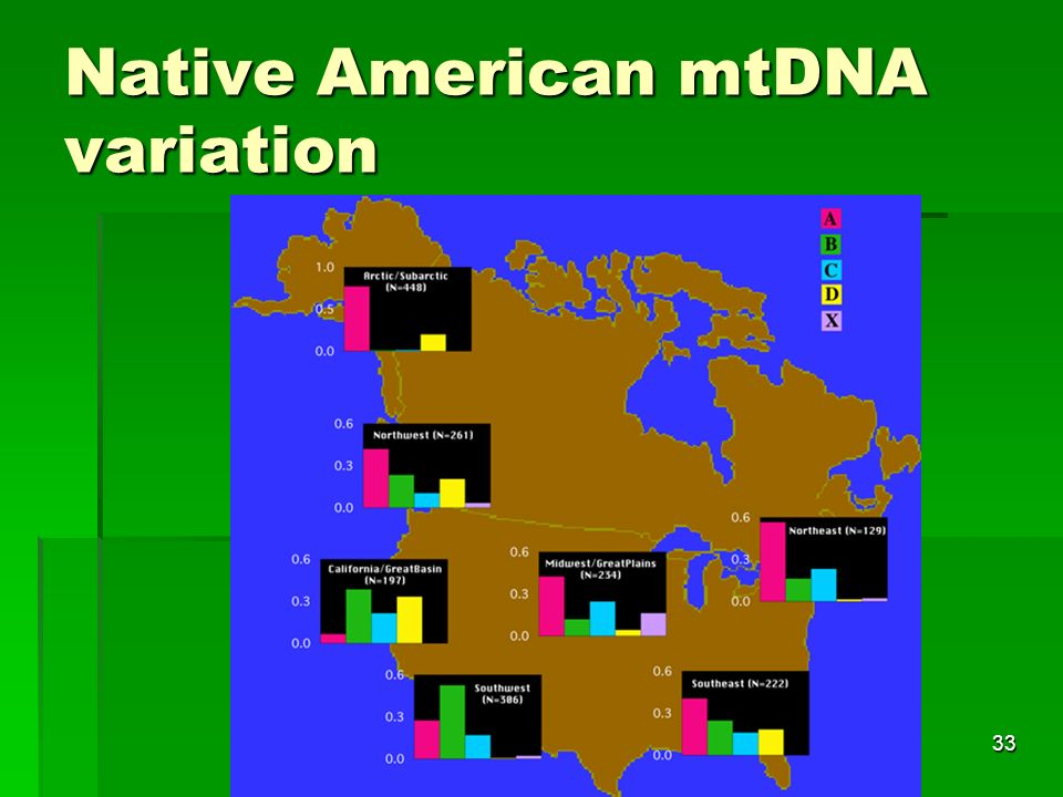 33 Native American mtDNA variation