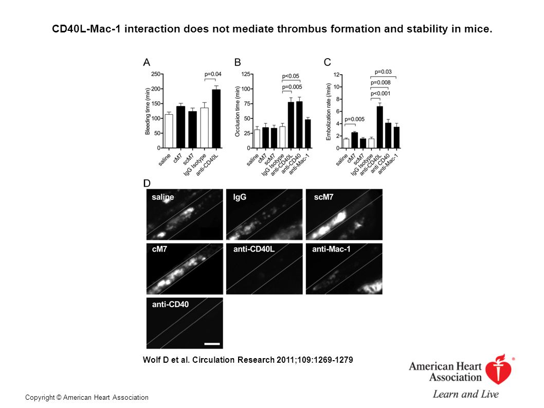 CD40L-Mac-1 interaction does not mediate thrombus formation and stability in mice.