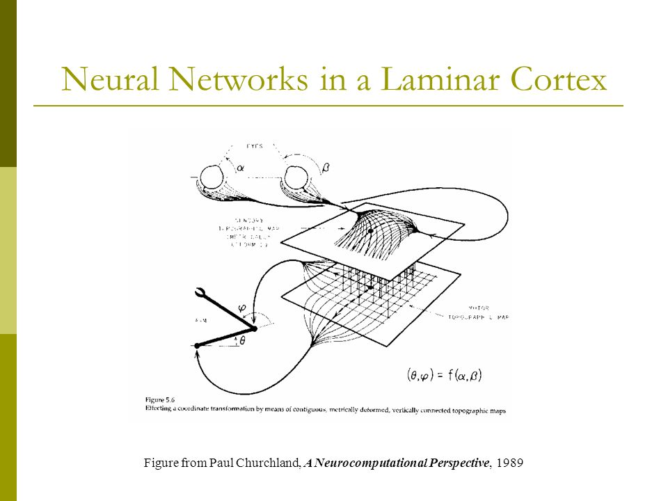 Neural Networks in a Laminar Cortex Figure from Paul Churchland, A Neurocomputational Perspective, 1989