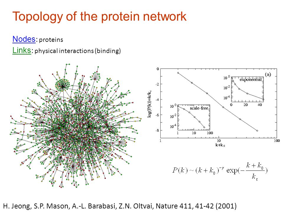 Topology of the protein network H. Jeong, S.P. Mason, A.-L.