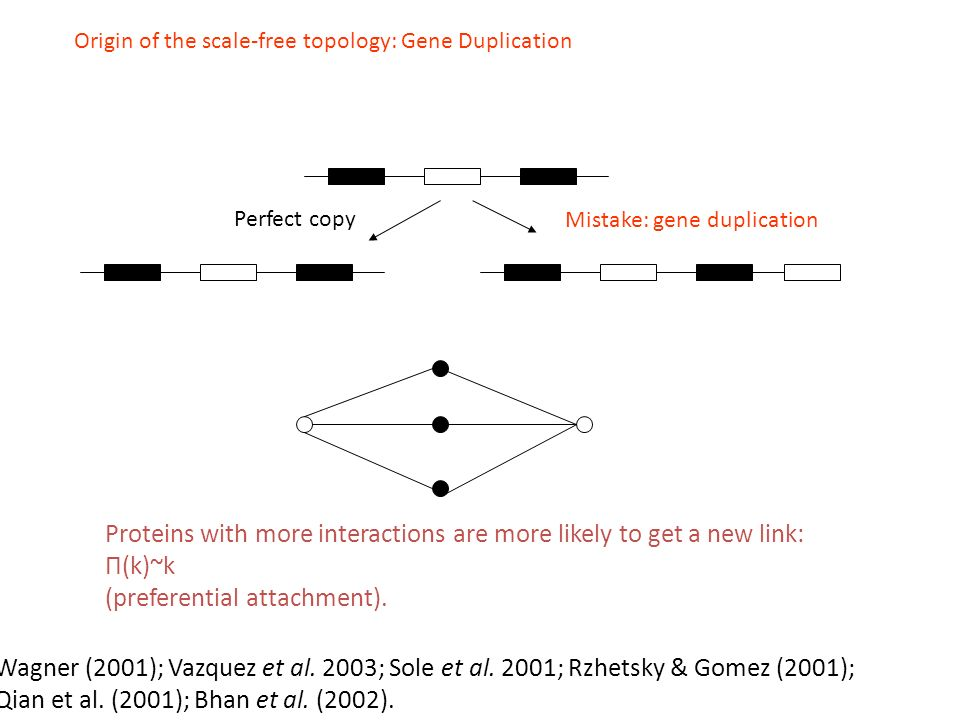Origin of the scale-free topology: Gene Duplication Perfect copy Mistake: gene duplication Wagner (2001); Vazquez et al.