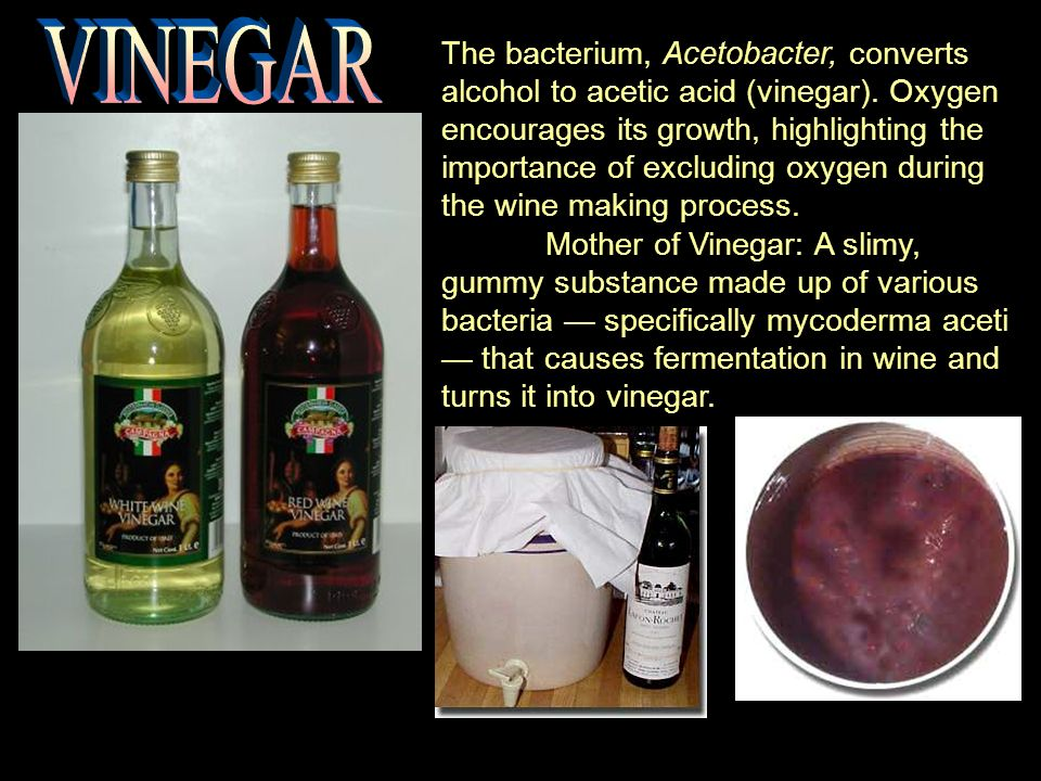 The bacterium, Acetobacter, converts alcohol to acetic acid (vinegar).