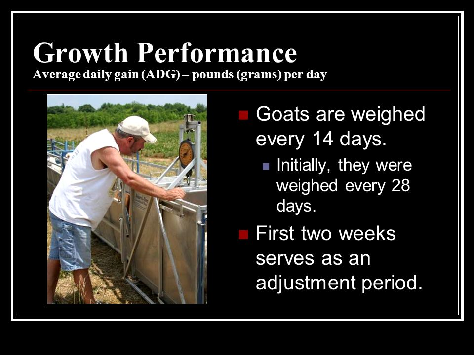 Growth Performance Average daily gain (ADG) – pounds (grams) per day Goats are weighed every 14 days.