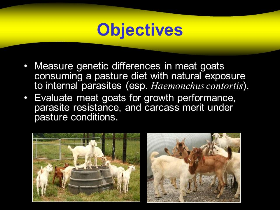 Objectives Measure genetic differences in meat goats consuming a pasture diet with natural exposure to internal parasites (esp.