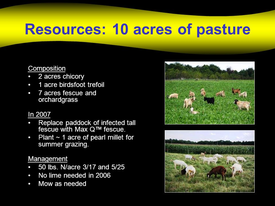 Resources: 10 acres of pasture Composition 2 acres chicory 1 acre birdsfoot trefoil 7 acres fescue and orchardgrass In 2007 Replace paddock of infected tall fescue with Max Q fescue.