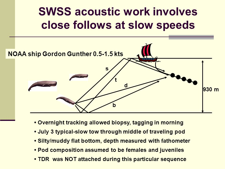 SWSS acoustic work involves close follows at slow speeds NOAA ship Gordon Gunther kts Overnight tracking allowed biopsy, tagging in morning July 3 typical-slow tow through middle of traveling pod Silty/muddy flat bottom, depth measured with fathometer Pod composition assumed to be females and juveniles TDR was NOT attached during this particular sequence 930 m d s b t