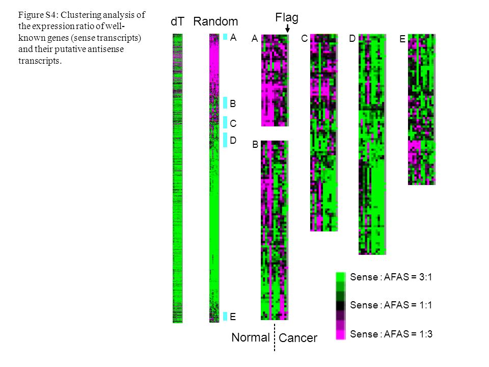 A B C D A B CD E E Flag dTRandom Normal Cancer Sense : AFAS = 3:1 Sense : AFAS = 1:1 Sense : AFAS = 1:3 Figure S4: Clustering analysis of the expression ratio of well- known genes (sense transcripts) and their putative antisense transcripts.