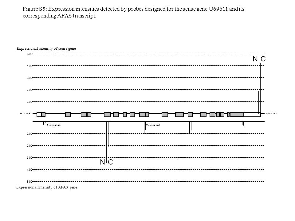 Truncated N C N C Expressional intensity of sense gene Expressional intensity of AFAS gene Figure S5: Expression intensities detected by probes designed for the sense gene U69611 and its corresponding AFAS transcript.