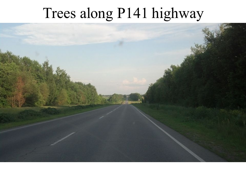 Trees along P141 highway