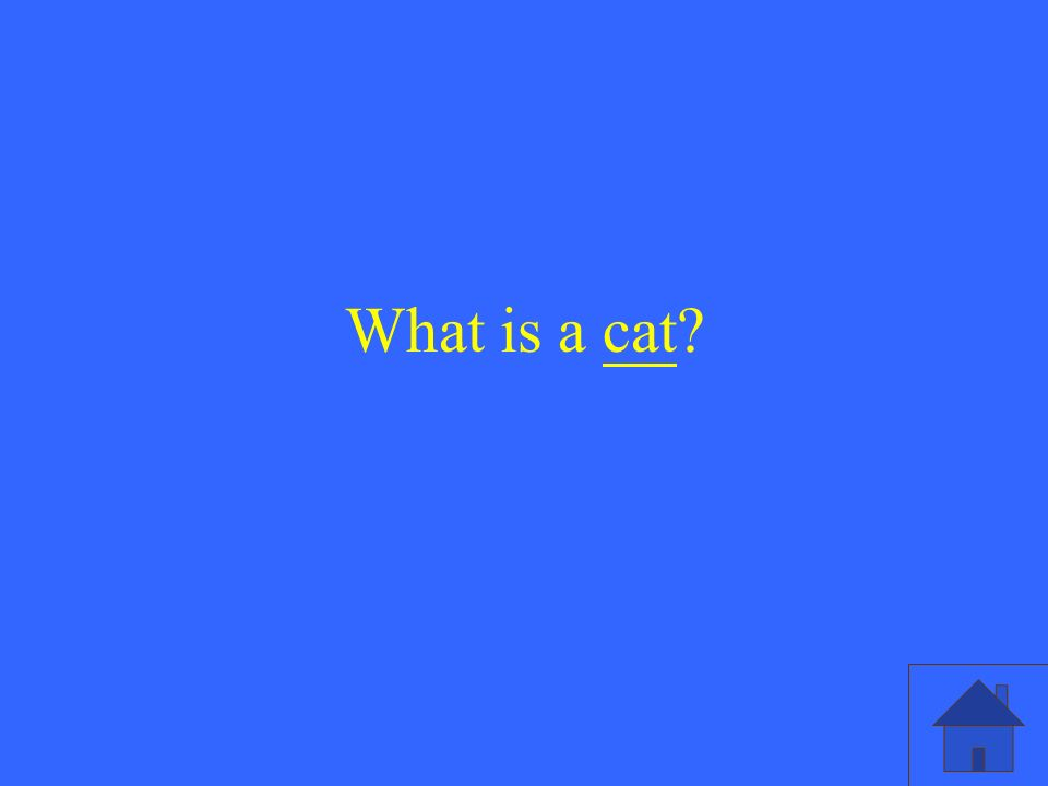 What is a cat