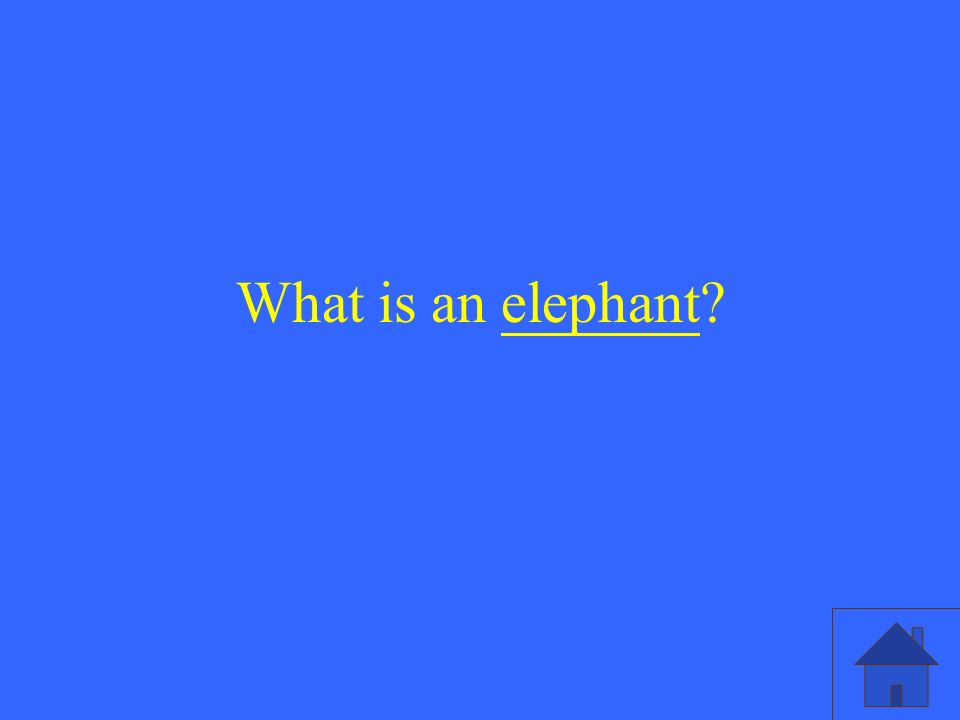 What is an elephant