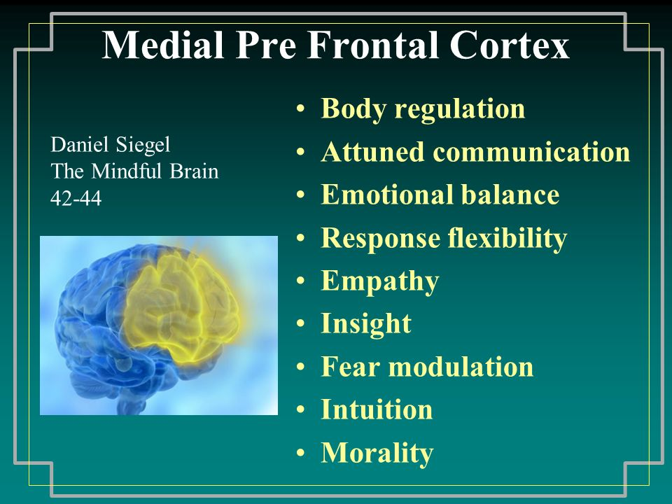 Medial Pre Frontal Cortex Body regulation Attuned communication Emotional balance Response flexibility Empathy Insight Fear modulation Intuition Morality Daniel Siegel The Mindful Brain 42-44