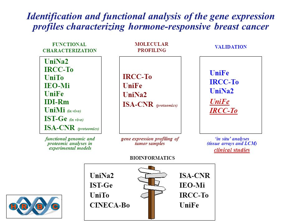 Identification and functional analysis of the gene expression profiles characterizing hormone-responsive breast cancer FUNCTIONAL CHARACTERIZATION MOLECULAR PROFILING gene expression profiling of tumor samples functional genomic and proteomic analyses in experimental models in situ analyses (tissue arrays and LCM) clinical studies UniNa2 IRCC-To UniTo IEO-Mi UniFe IDI-Rm UniMi (in vivo) IST-Ge (in vivo) ISA-CNR (proteomics) IRCC-To UniFe UniNa2 ISA-CNR (proteomics) UniFe IRCC-To UniNa2 UniFe IRCC-To BIOINFORMATICS UniNa2ISA-CNR IST-GeIEO-Mi UniToIRCC-To CINECA-Bo UniFe VALIDATION