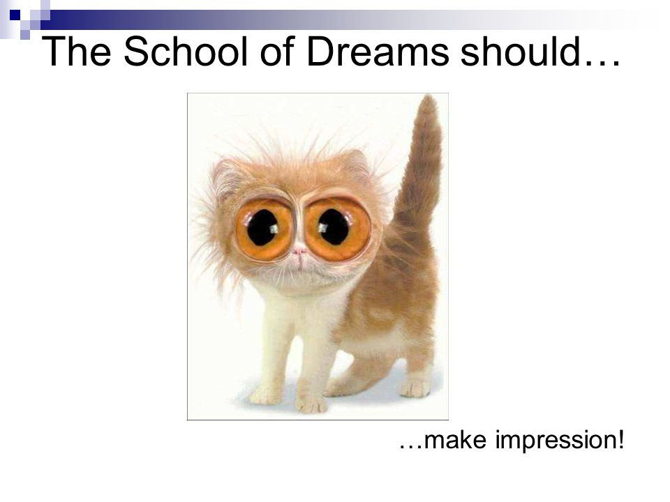 The School of Dreams should… …offer convenient transport to school