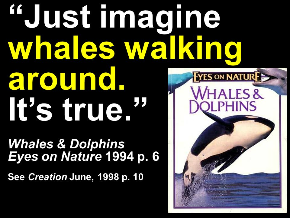 Just imagine whales walking around. Its true. Whales & Dolphins Eyes on Nature 1994 p.