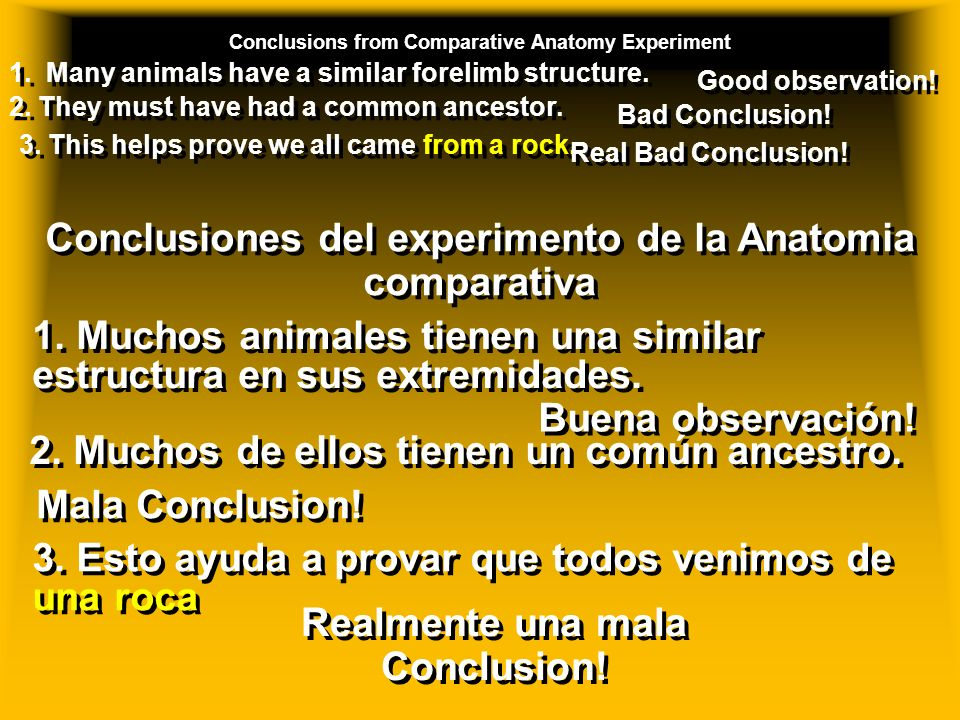 Conclusions from Comparative Anatomy Experiment 1.