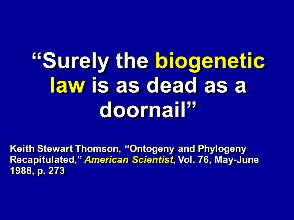 X X Surely the biogenetic law is as dead as a doornail Keith Stewart Thomson, Ontogeny and Phylogeny Recapitulated, American Scientist, Vol.