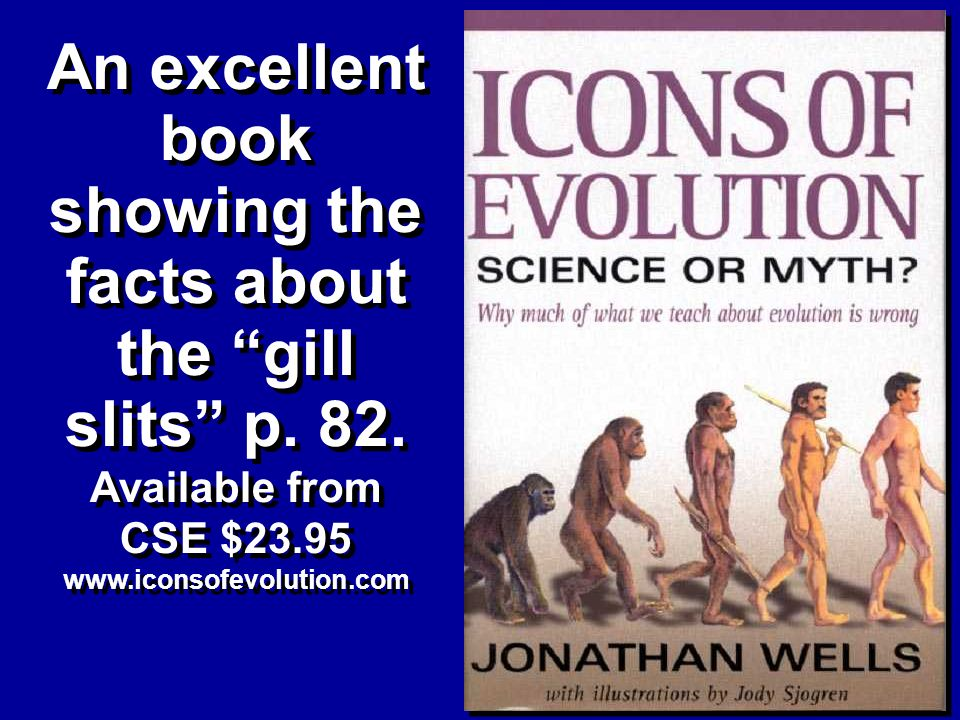 An excellent book showing the facts about the gill slits p.