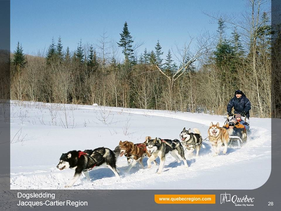 Dogsledding Jacques-Cartier Region 28