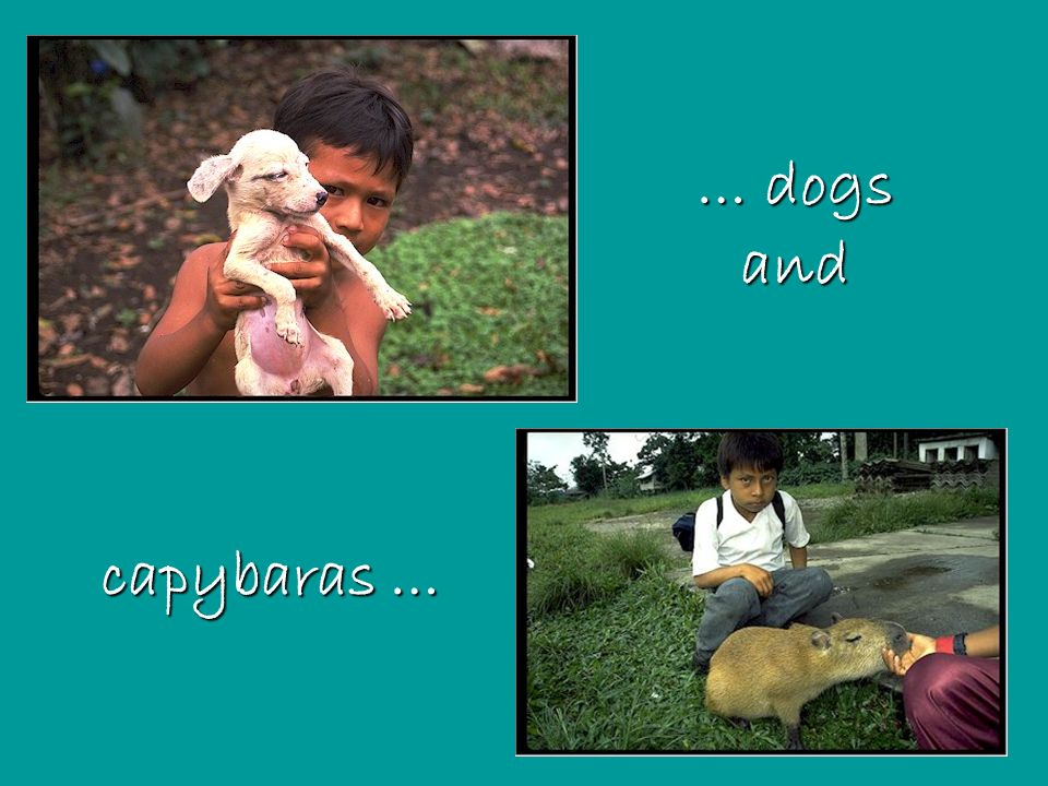 … dogs and capybaras …