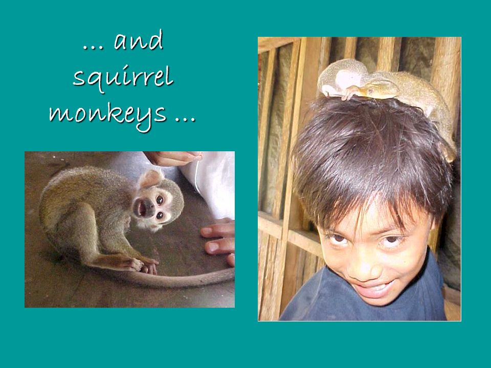 … and squirrel monkeys …
