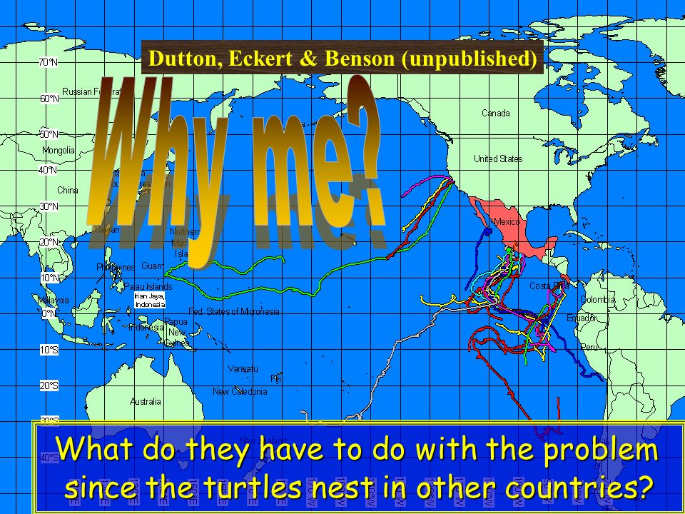 Dutton, Eckert & Benson (unpublished) What do they have to do with the problem since the turtles nest in other countries