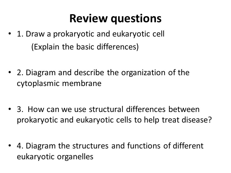 Review questions 1. Draw a prokaryotic and eukaryotic cell (Explain the basic differences) 2.