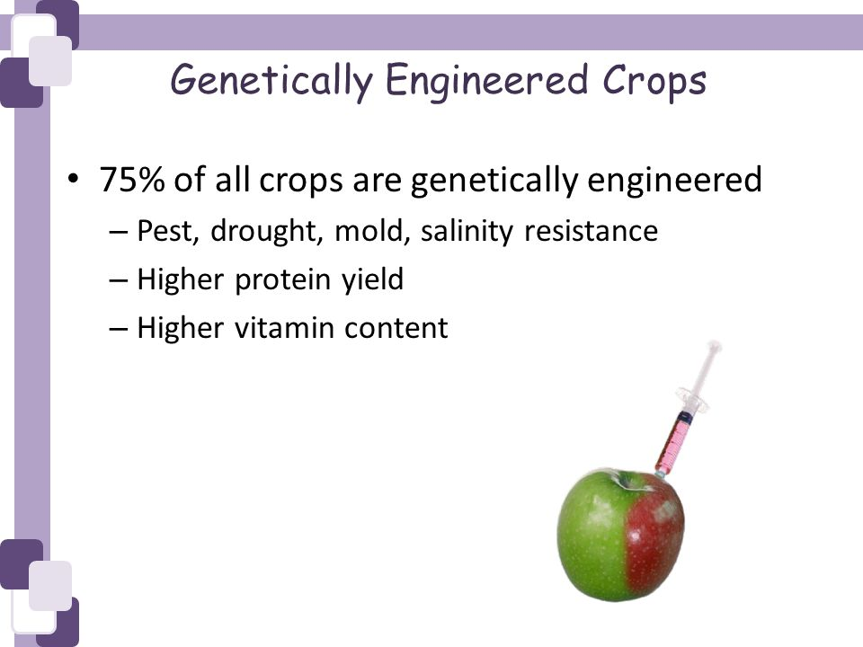 Genetically Engineered Crops 75% of all crops are genetically engineered – Pest, drought, mold, salinity resistance – Higher protein yield – Higher vitamin content