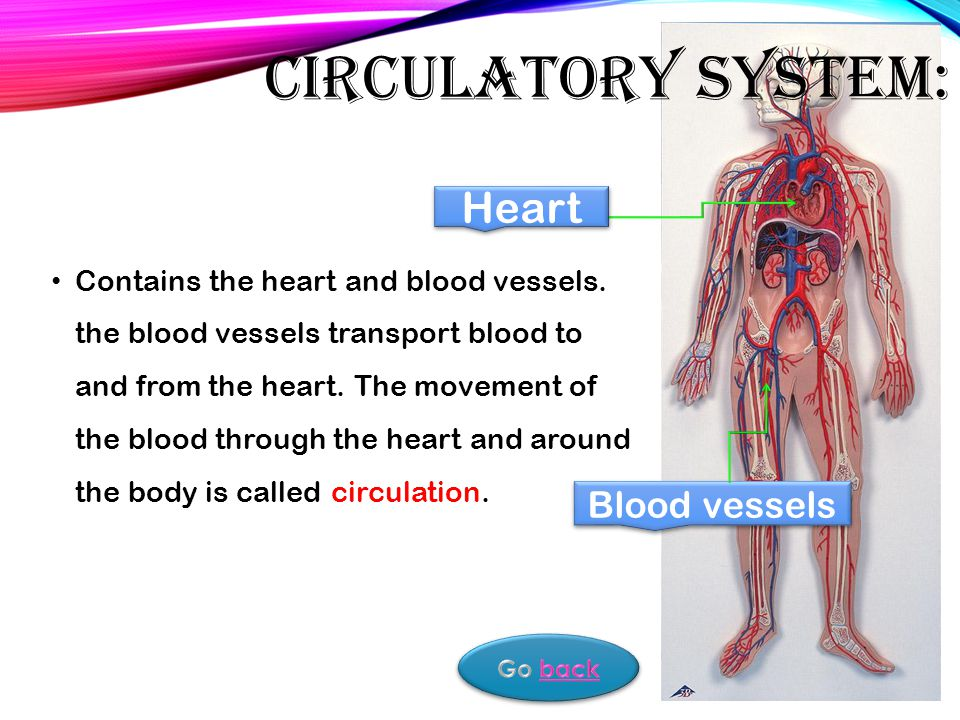 Objectives Definition Human Body Is Made Up Of Many Systems These