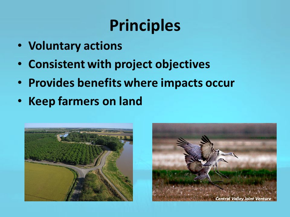 Principles Voluntary actions Consistent with project objectives Provides benefits where impacts occur Keep farmers on land Central Valley Joint Venture