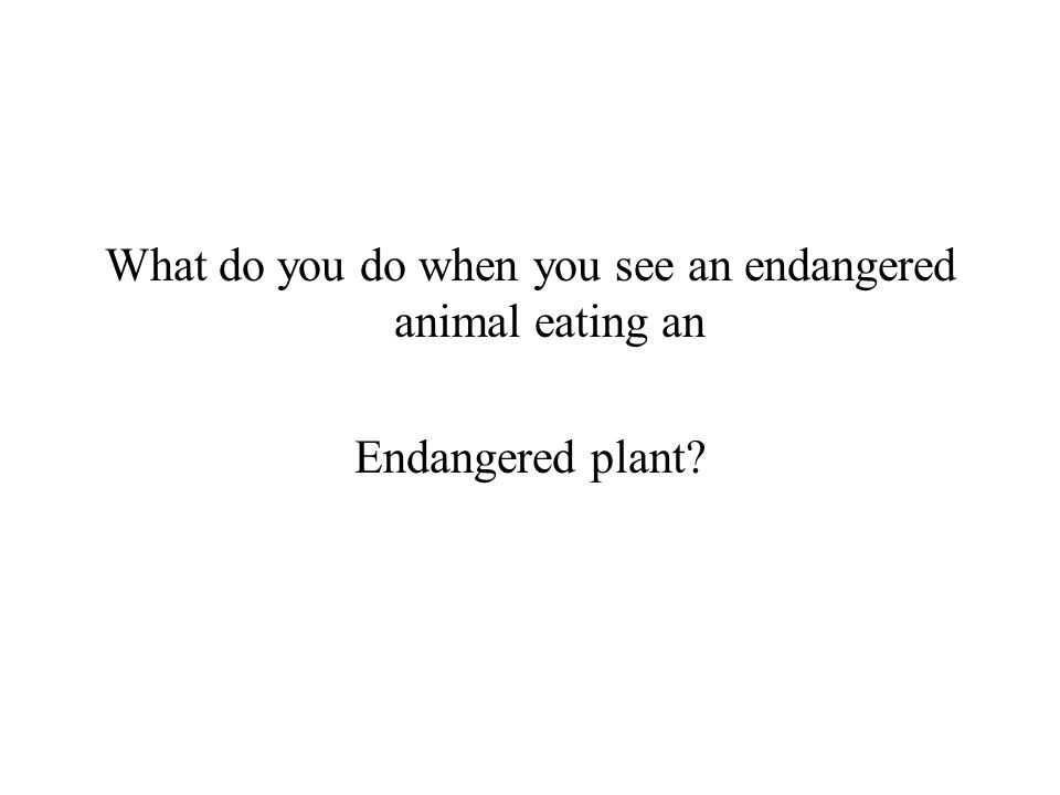 What do you do when you see an endangered animal eating an Endangered plant