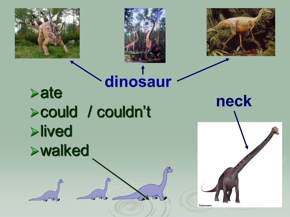  ate  could / couldn't  lived  walked neck dinosaur