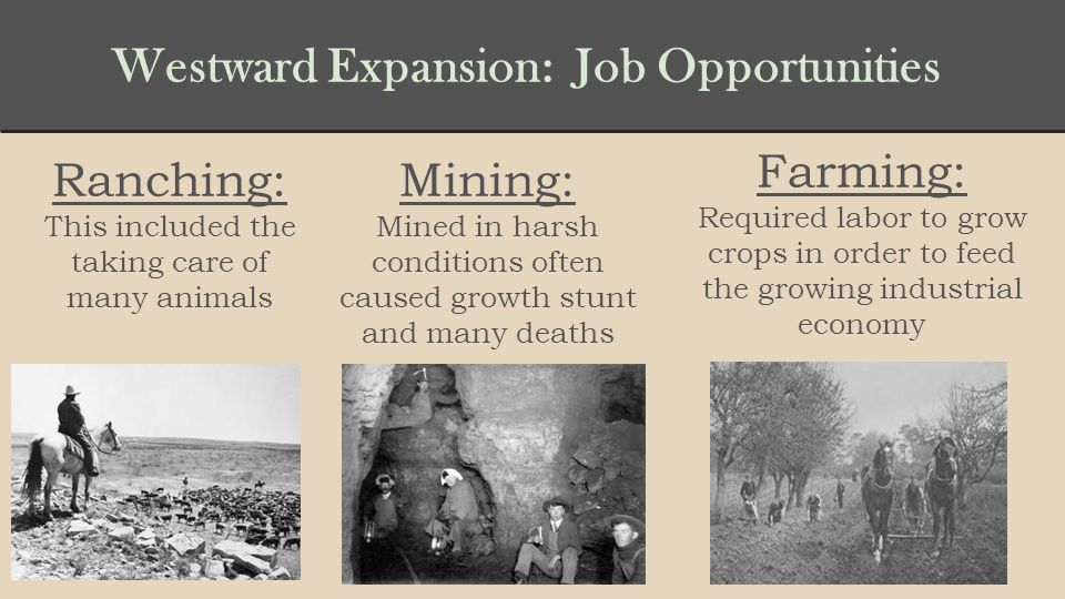 Westward Expansion: Job Opportunities Ranching: This included the taking care of many animals Mining: Mined in harsh conditions often caused growth stunt and many deaths Farming: Required labor to grow crops in order to feed the growing industrial economy