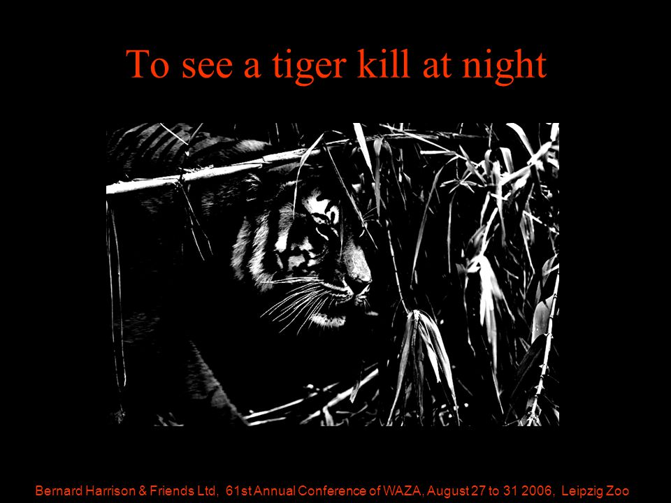 Bernard Harrison & Friends Ltd, 61st Annual Conference of WAZA, August 27 to 31 2006, Leipzig Zoo To see a tiger kill at night