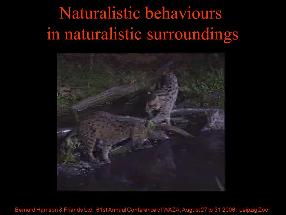 Bernard Harrison & Friends Ltd, 61st Annual Conference of WAZA, August 27 to 31 2006, Leipzig Zoo Naturalistic behaviours in naturalistic surroundings