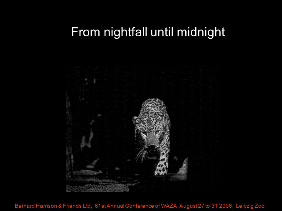 Bernard Harrison & Friends Ltd, 61st Annual Conference of WAZA, August 27 to 31 2006, Leipzig Zoo From nightfall until midnight