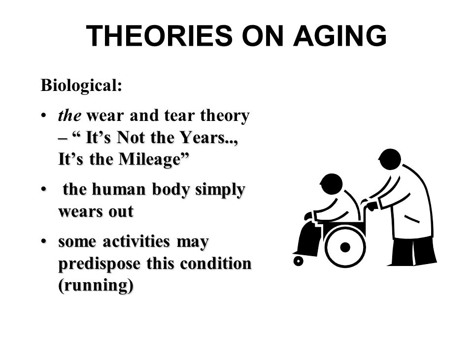 THEORIES ON AGING Biological: – It's Not the Years.., It's the Mileage the wear and tear theory – It's Not the Years.., It's the Mileage the human body simply wears out the human body simply wears out some activities may predispose this condition (running)some activities may predispose this condition (running)