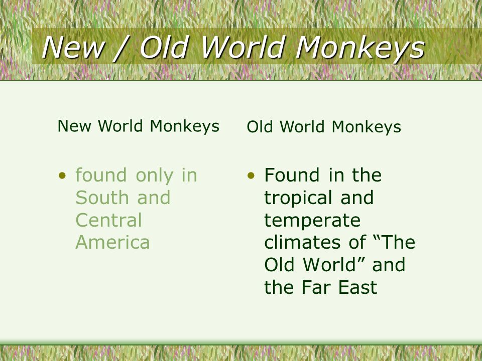New / Old World Monkeys found only in South and Central America Found in the tropical and temperate climates of The Old World and the Far East New World Monkeys Old World Monkeys