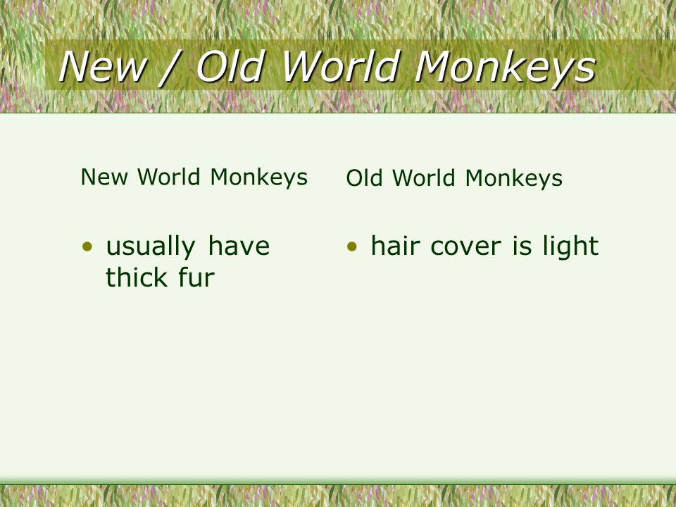 New / Old World Monkeys usually have thick fur hair cover is light New World Monkeys Old World Monkeys