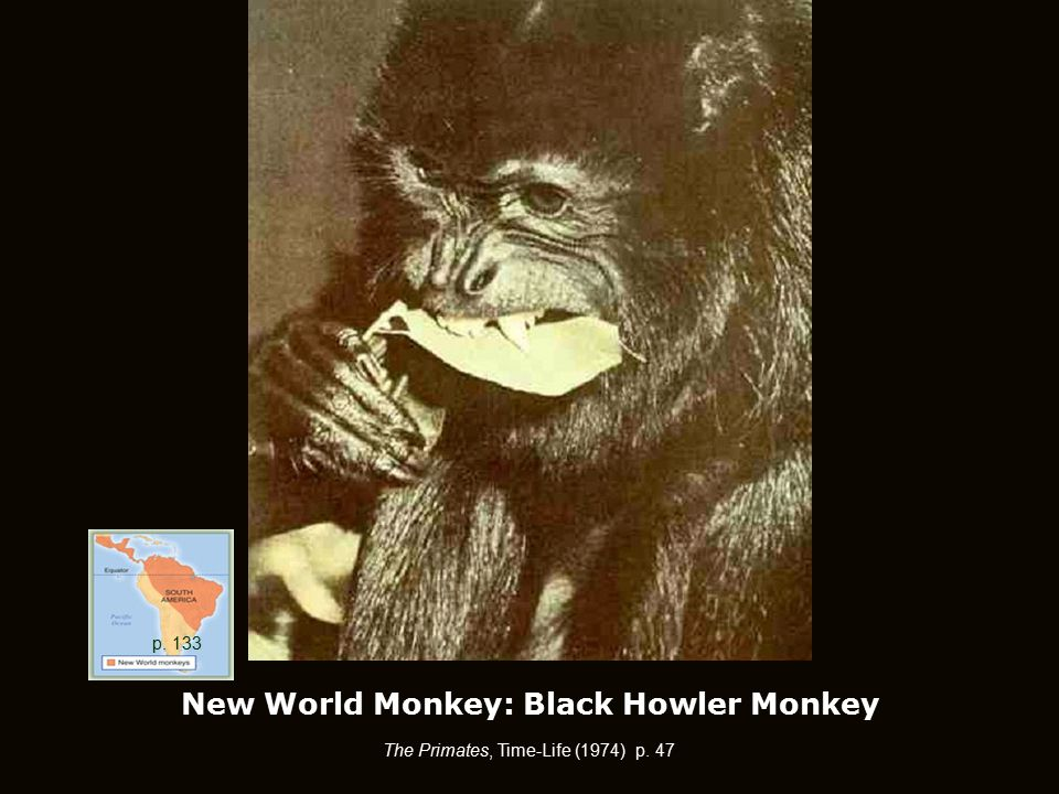 New World Monkey: Black Howler Monkey The Primates, Time-Life (1974) p. 47 p. 133