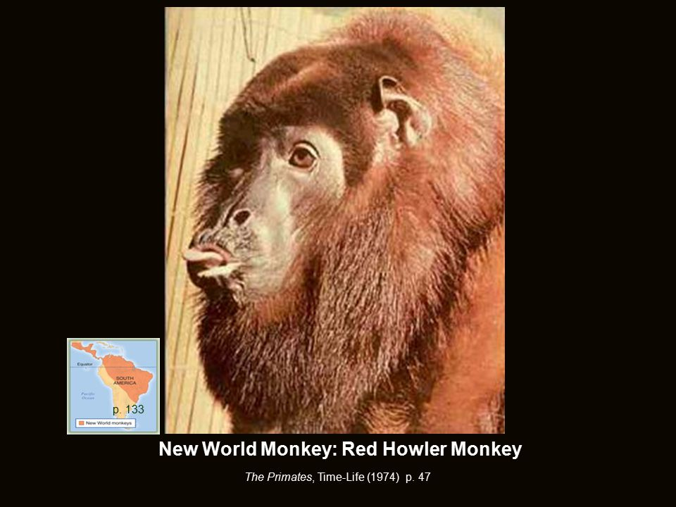 New World Monkey: Red Howler Monkey The Primates, Time-Life (1974) p. 47 p. 133